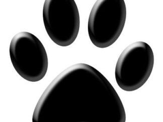 Hunting Dog Paw Care